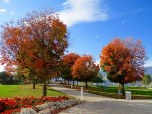 white-trash-bin-under-red-leaves-tree-226424
